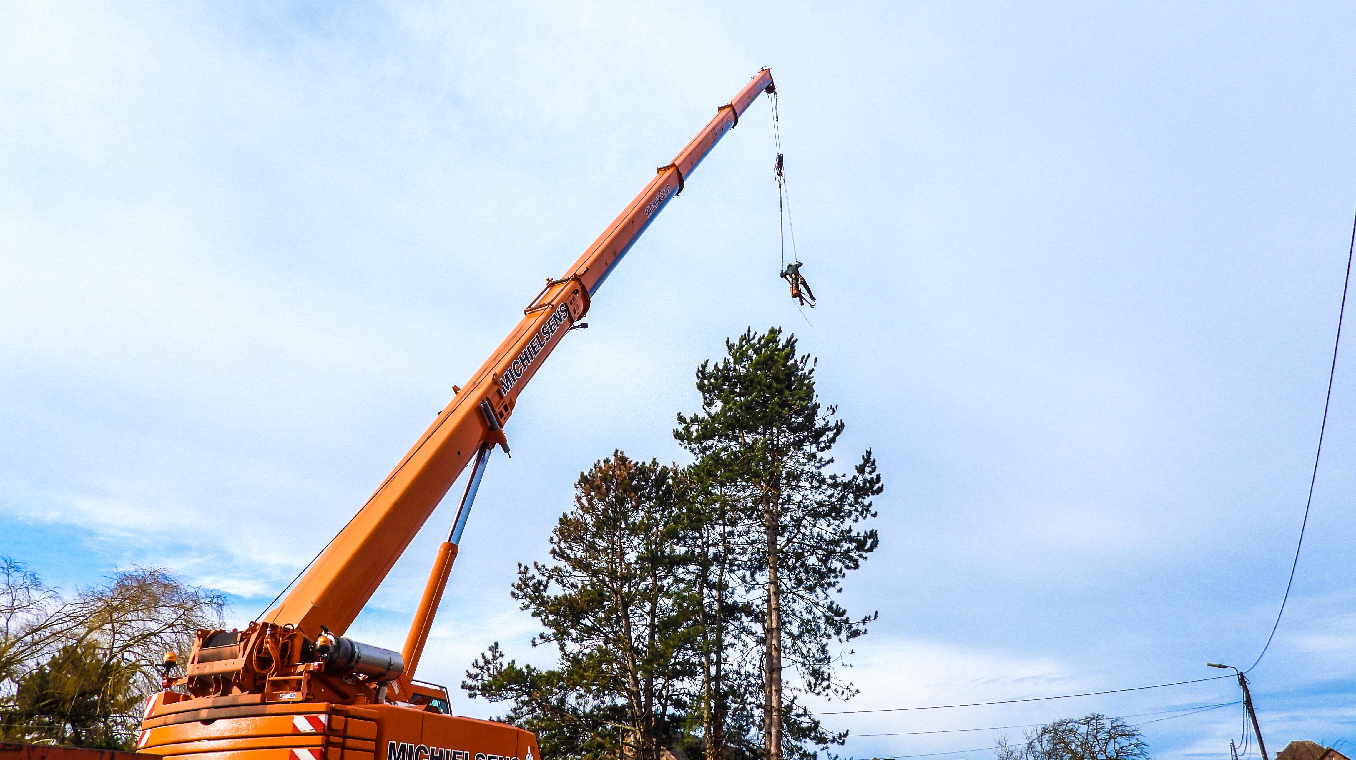 Afbreken bomen met kraantechnieken (januari 2022)