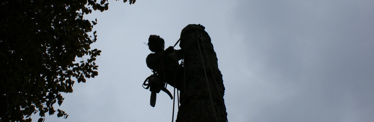 Afbreken bomen met klimsporen