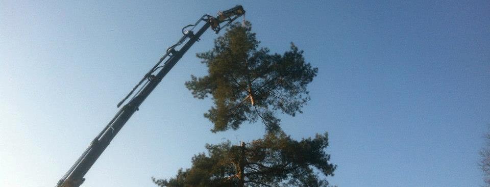 Afbreken bomen met kraantechnieken