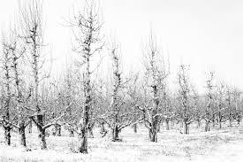 Avondcursus Fruitbomen Wintersnoei (januari 2022)